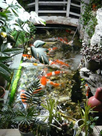 Red Lantern House: Fish all over the place!