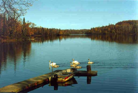 Daniels Lake Lodge Bed & Breakfast: Dock and swans