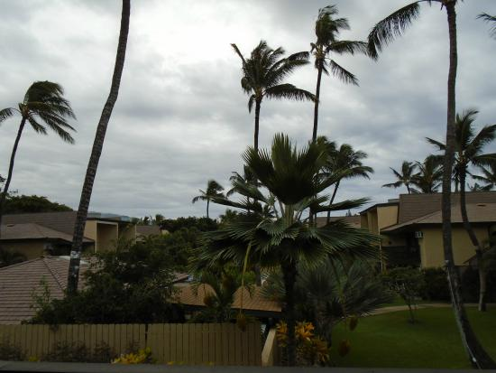Kihei Garden Estates: This is the view from the lanai.