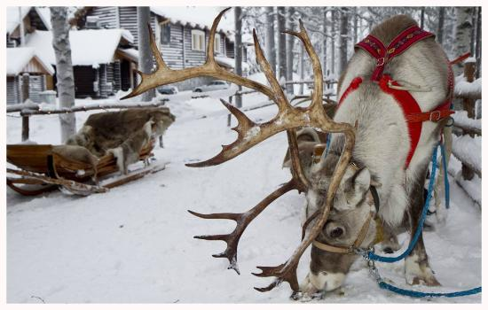 Santa Claus Reindeer Rovaniemi Finland Hours Address