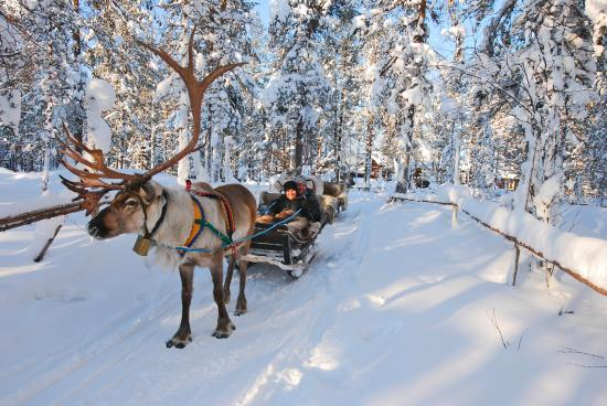 santa claus reindeer relaxing moment in the snowy forest - Santa Claus And Reindeers
