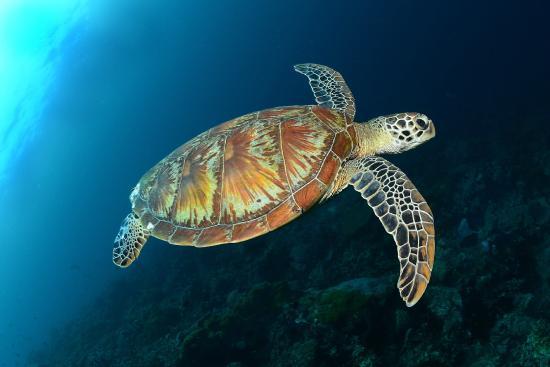 Madablu Dive in Madagascar: Parco Marino Tanikely