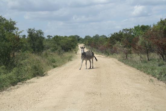 Pungwe Safari Camp: .