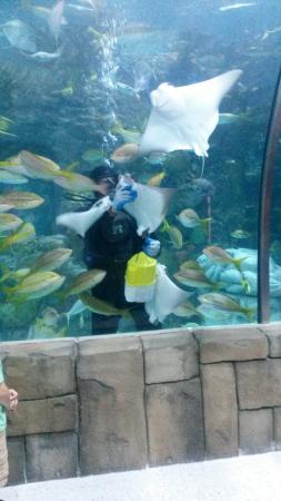 Audubon Aquarium Of The Americas Foto Di Audubon