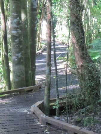 Te Waikoropupu Springs (Pupu Springs): Tranquil Walk