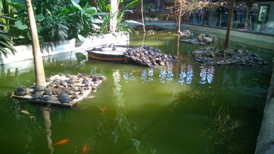 Tartarughe nello stagno foto di stazione di atocha for Stagno tartarughe