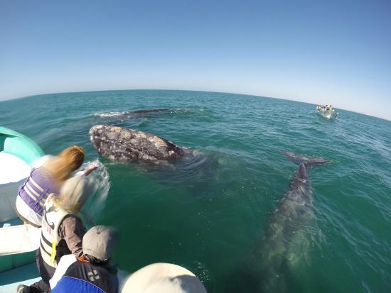Baja Ecotours: Whales!