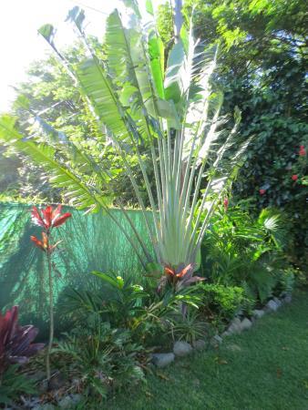Kalani Hawaii Private Lodging: Backyard.