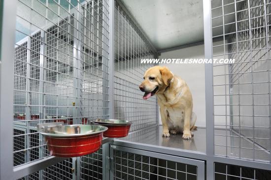 Hotel Spa Norat O Grove: Habitaciones para mascotas