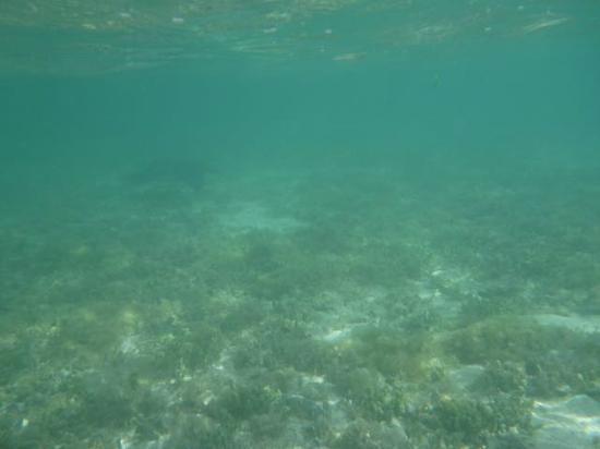 ココス アイランド リゾート , ビーチで潜っていたら通り過ぎた