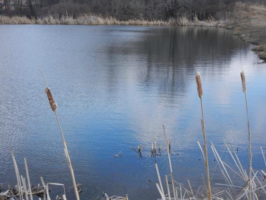 Horizon View Farms: Reflective pond.