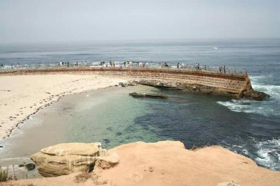 Foto De La Jolla Cove Seal Beach Area In