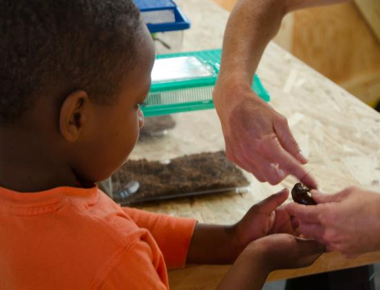 Buffalo Museum of Science: Register for one of our many weekend workshops, like Bug Club.
