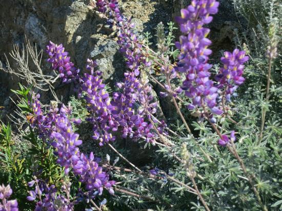 The Hacienda: March Wild Flowers