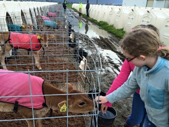 Tillamook Eco Adventures- Day Tours: The calves were a highlight