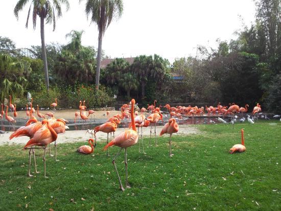 Flamingos Em Busch Garden Picture Of Busch Gardens Tampa Tampa Tripadvisor