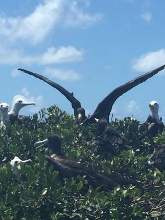 Lighthouse Bay Resort Hotel: Fricket Bird Sanctuary