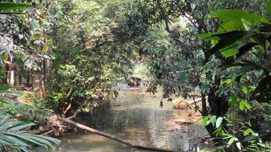 Sahakari Spice Farm: Elephant getting a bath