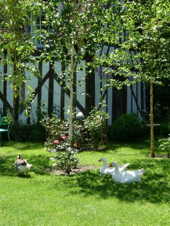 Souesmes, Frankrijk: Geese in front of bakery
