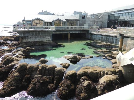 Kelp Forest Feeding Picture Of Monterey Bay Aquarium