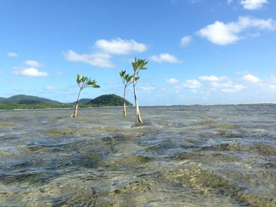 Cades Bay, Antigua: On the reef