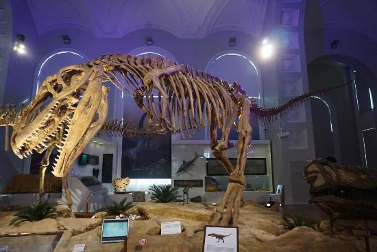Luonnontieteellinen museo: Giganotosaurus