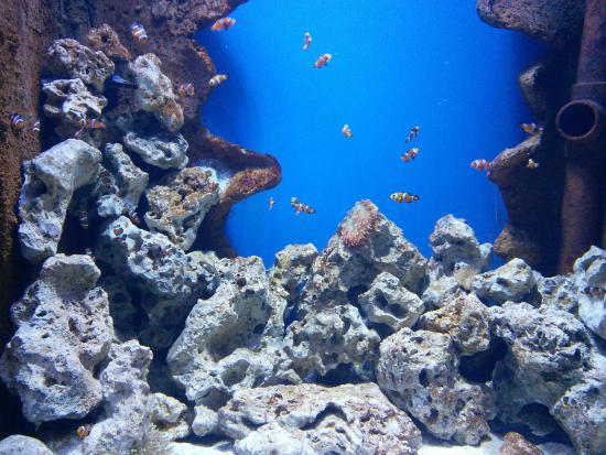 Malta National Aquarium - Picture of Malta National Aquarium, Qawra ...