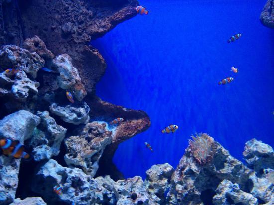 Malta National Aquarium: Aquarium