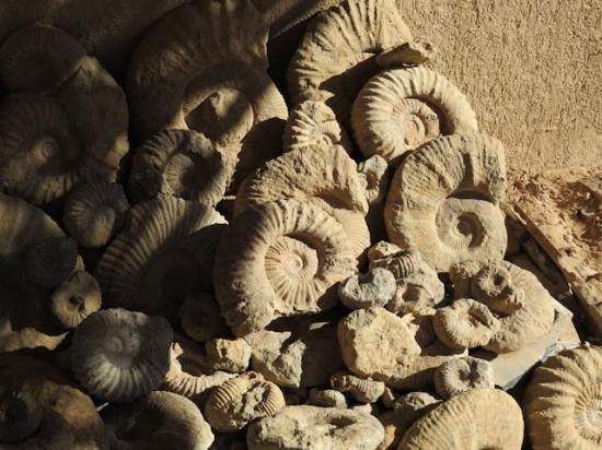 Macro Fossiles Kasbah: Fossils