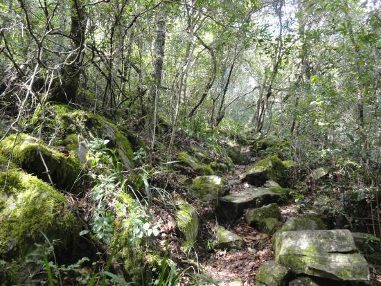 Van Stadens Nature Reserve: Forest Walk