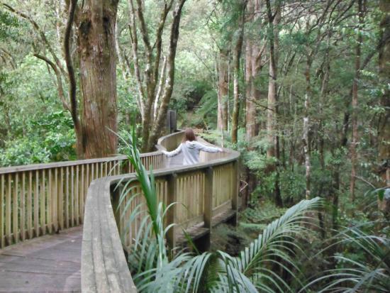 Whangarei, Nuova Zelanda: Beautiful timber bridge