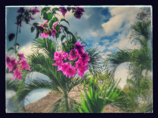 Chan Chich Lodge : Beautiful flowers among the Mayan ruins