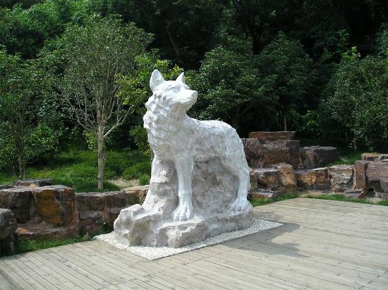 Wolf Mountain: The white wolf