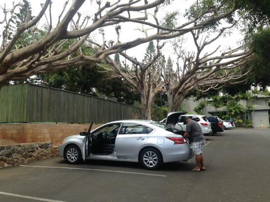 The Gardens at West Maui Hotel : Parking lot - lots of space, FREE.