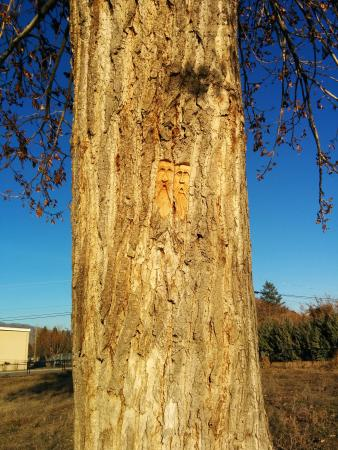 Kamloops Rivers Trail: Tree art. Fabulous carving. Thanks