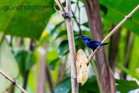 Tico Rainforest  B & B : In the garden