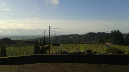 Black Walnut Inn & Vineyard: View from the courtyard