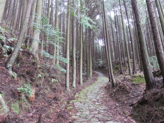 Kumano Kodo Pilgrimage Routes (World Heritage)