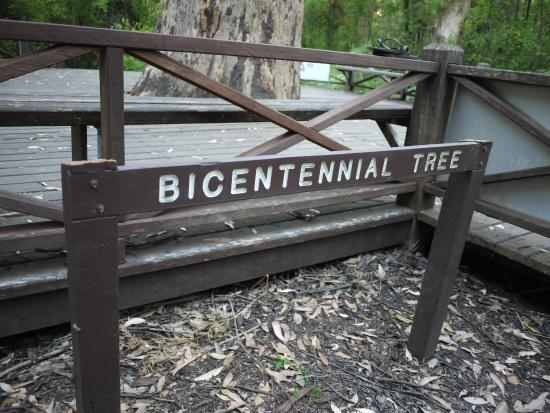 Dave Evans Bicentennial Tree: 最高一座樹梯的名字