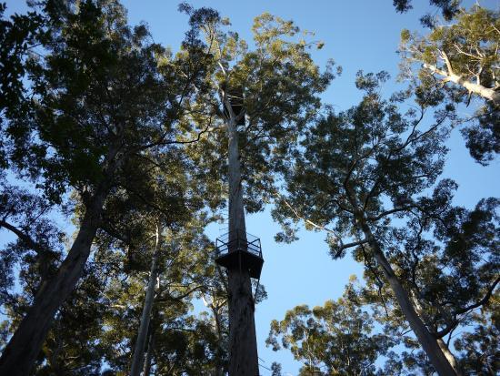 Dave Evans Bicentennial Tree: 由下往上拍
