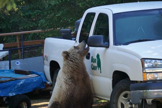 Bear Camp: camp visit