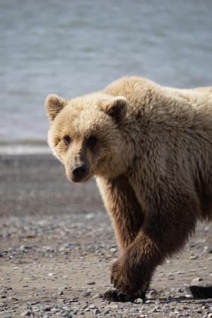 Bear Camp: getting up close