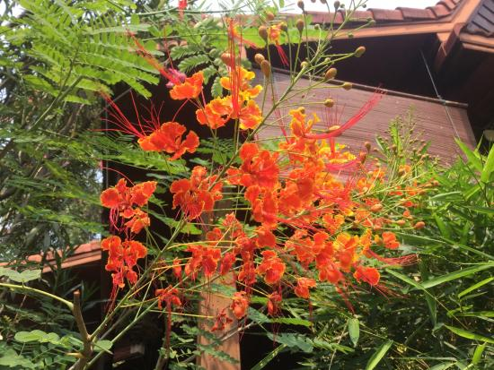 Auberge Sala Inpeng (Mekong Riverside Inn): juste une fleur