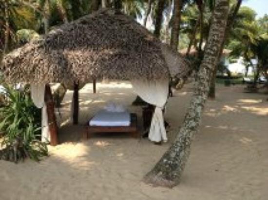 Cocovilla-Resort : jardin