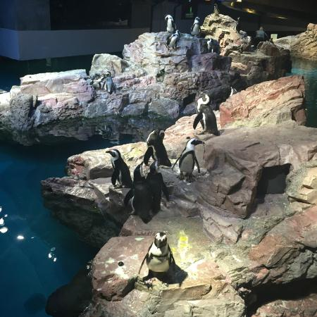 Gliding Rays Picture Of New England Aquarium Boston Tripadvisor