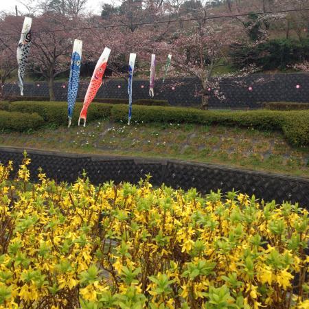 Takigashira Park : 色々な花も咲いていて楽しいです。