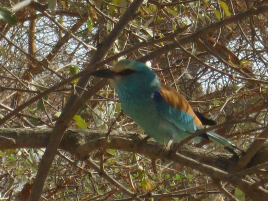 Reserve De Bandia: oiseau vu aussi dans la brousse
