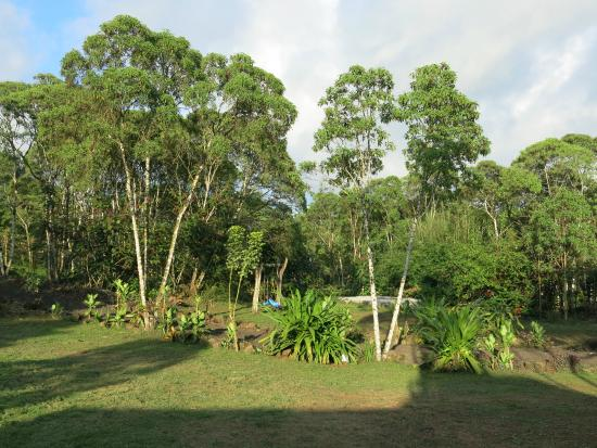 Semilla Verde Boutique Hotel: Gardens