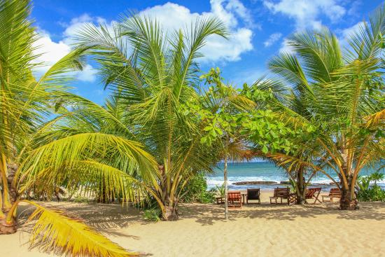 Patini Bungalows - Beach Garden: View from bungalow