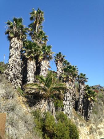 Swami's Beach: palms on slope to beach